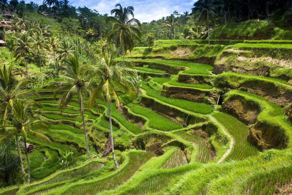 Ubud en zijn prachtige rijstvelden
