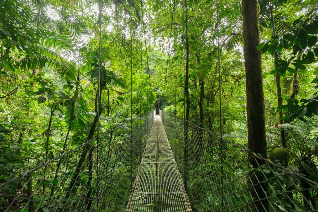 Costa Rica - Bosque Nuboso Monteverde