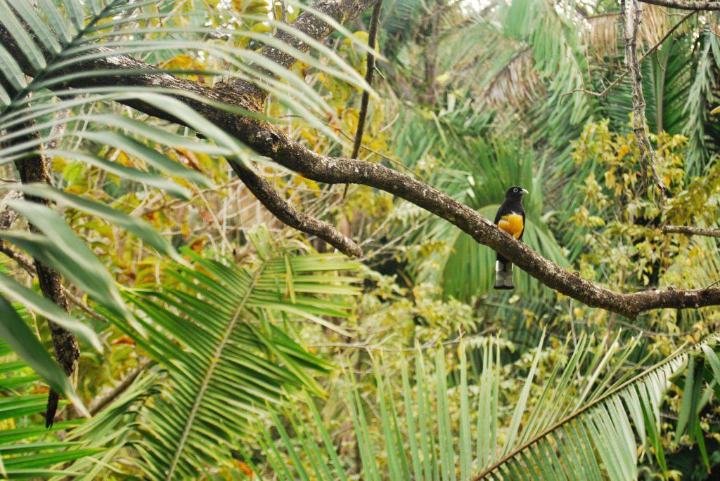 Costa Rica - Nosara - Alyssa Crouse