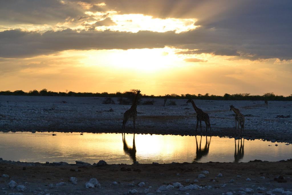 Waterpoel Namibië