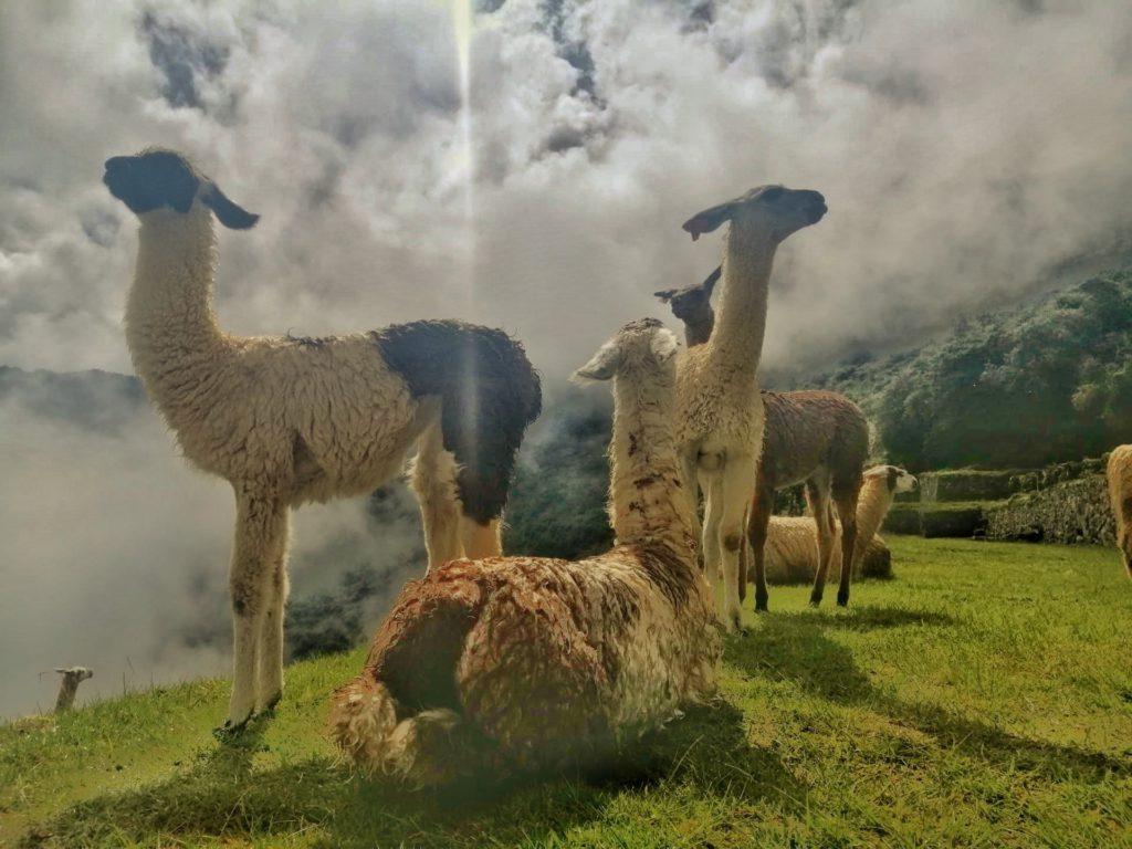 Altiplano naar Cusco