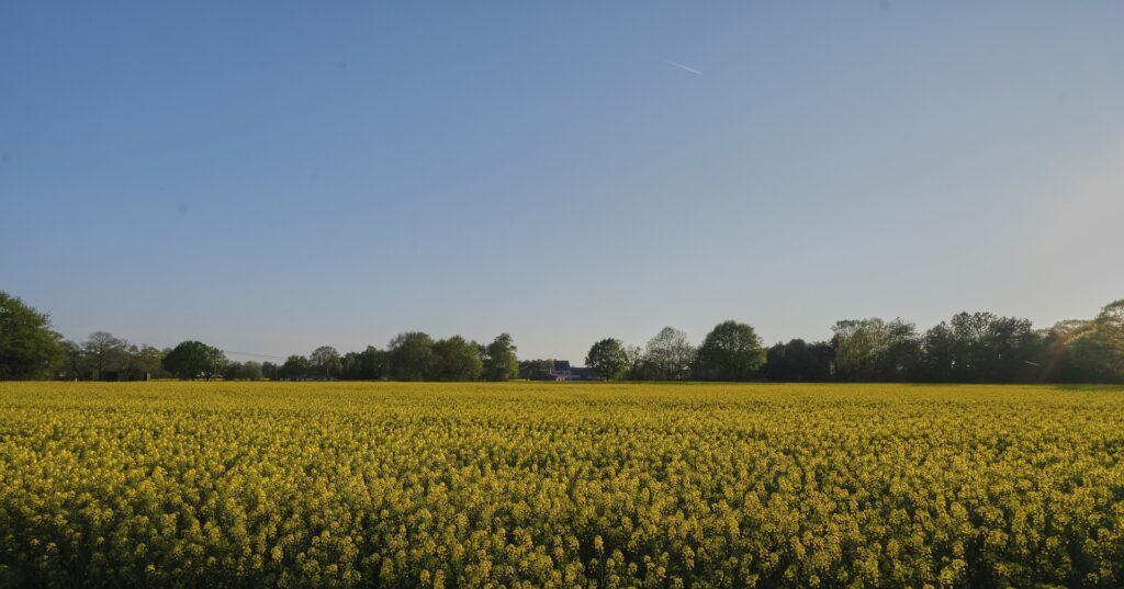 Veld met bloemen in Herentals (Olen)