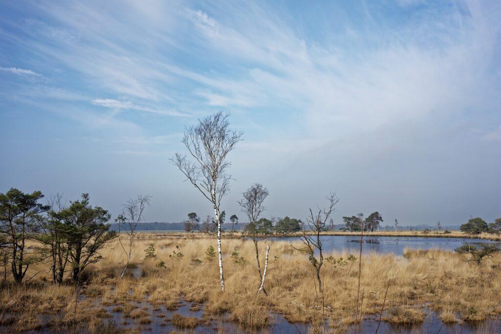 Kalmthoutse Heide landschap